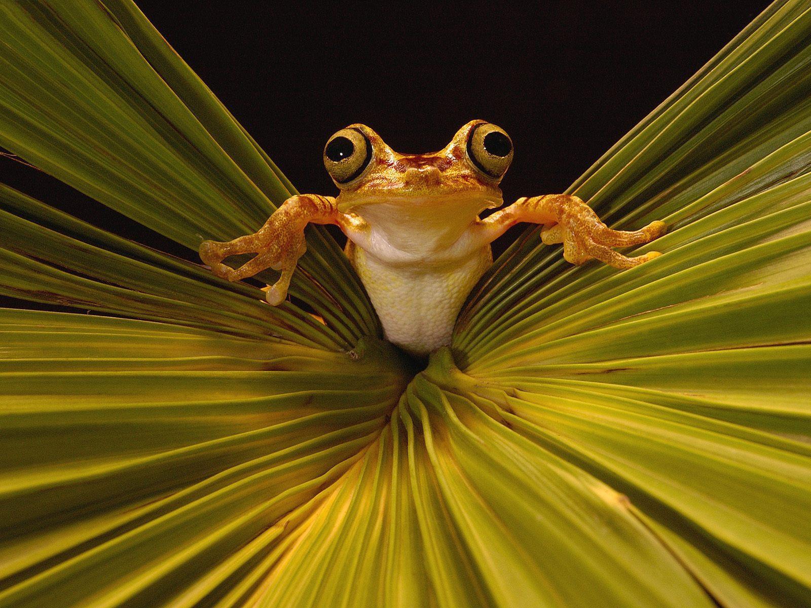 http://4.bp.blogspot.com/_3zkyrfijNIM/TFJnS5lkLaI/AAAAAAAAAgw/4rF0pUk9JSk/s1600/tree_frog_rainforest.jpg