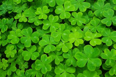 NAMC Montessori classroom St. Patrick's day activities shamrocks clover