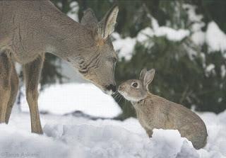 ¿Bambi y Tambor?