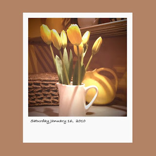 iphone polaroid, flowers, yellow tulips