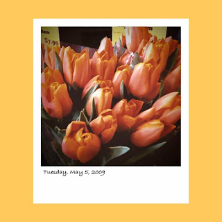 iPhone polaroid, orange tulips