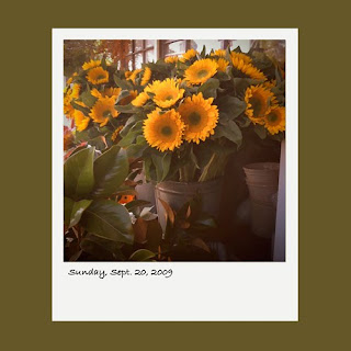iPhone polaroid, sunflowers