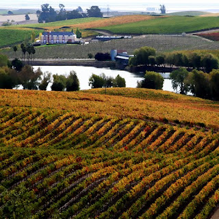 Domaine Carneros, autumn in the wine country