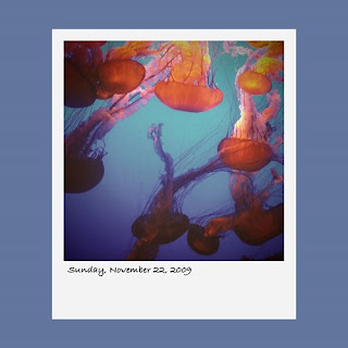jellyfish, jelly fish, Monterey Bay Aquarium, iPhone polaroid
