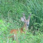 [NV+deer]