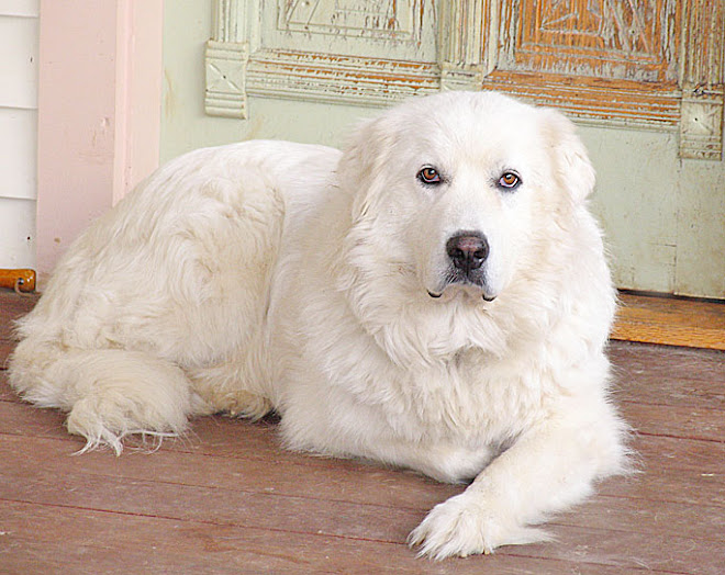 Big Fluffy Dog Rescue