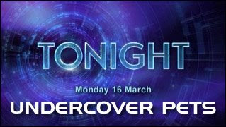 Tonight - Undercover Pets