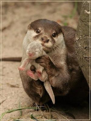 Mamãe lontra orgulhosamente mostrando o seu bebê