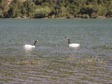 Laguna artificial Trupan
