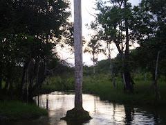Igarapé do rio Caeté