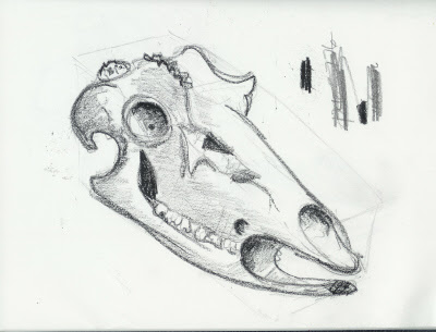 Whitetail+deer+skull+drawings