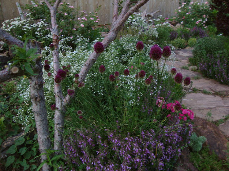Alliums  Under the Peach Tree