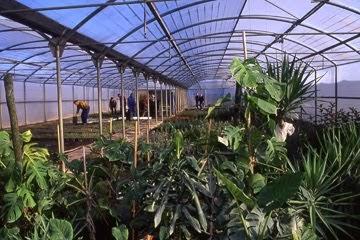 Plantas prados y jardines barranquilla ltda vivero for Viveros plantas ornamentales colombia