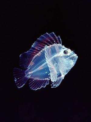Beautiful Translucent Underwater Creatures