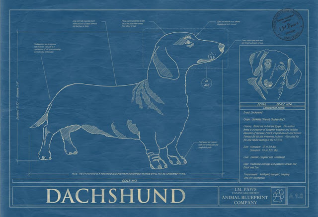 The Long And Short Of It All A Dachshund Dog News