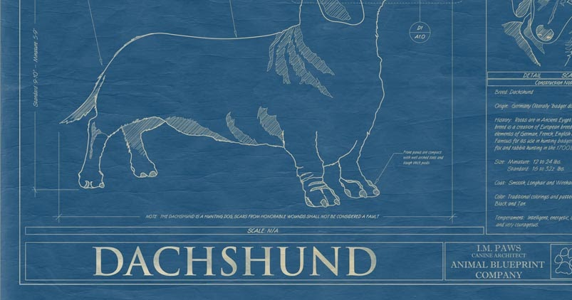 The long and short of it all a dachshund dog news magazine the long and short of it all a dachshund dog news magazine dachshund blueprint malvernweather Gallery