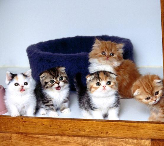 kittens. Cute Pics Of Kittens