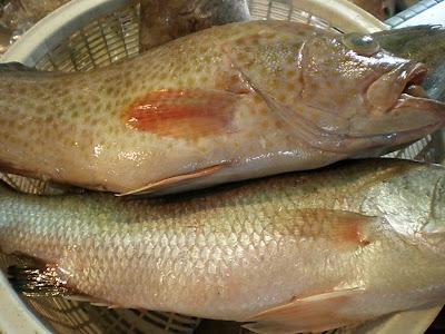 Ikan Segar Dari Laut - Tanjung Lumpur Kuantan ~