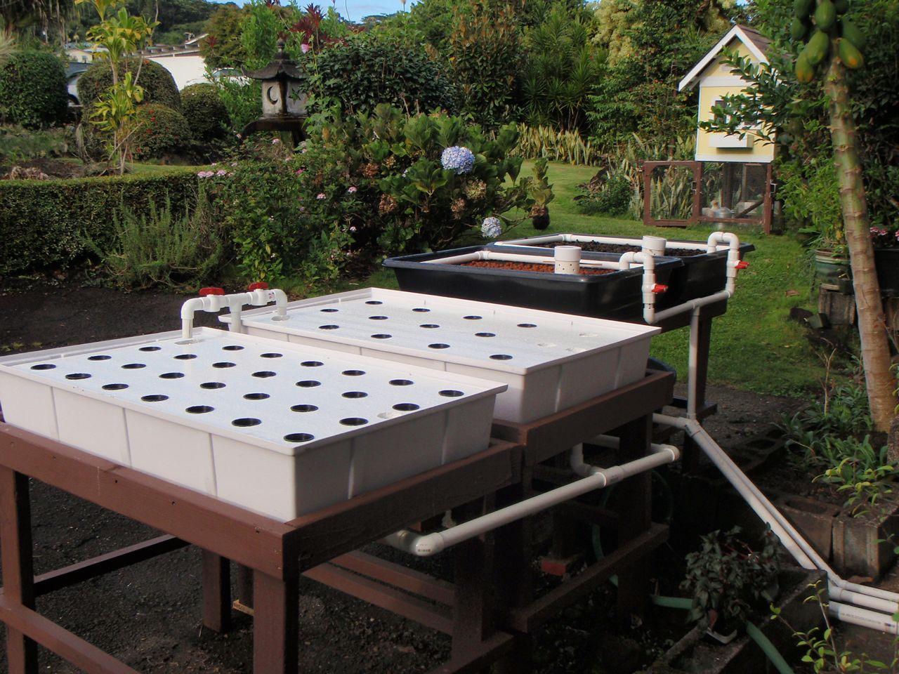 Joan goes green aquaponics setup 75 done for Aquaponics grow bed