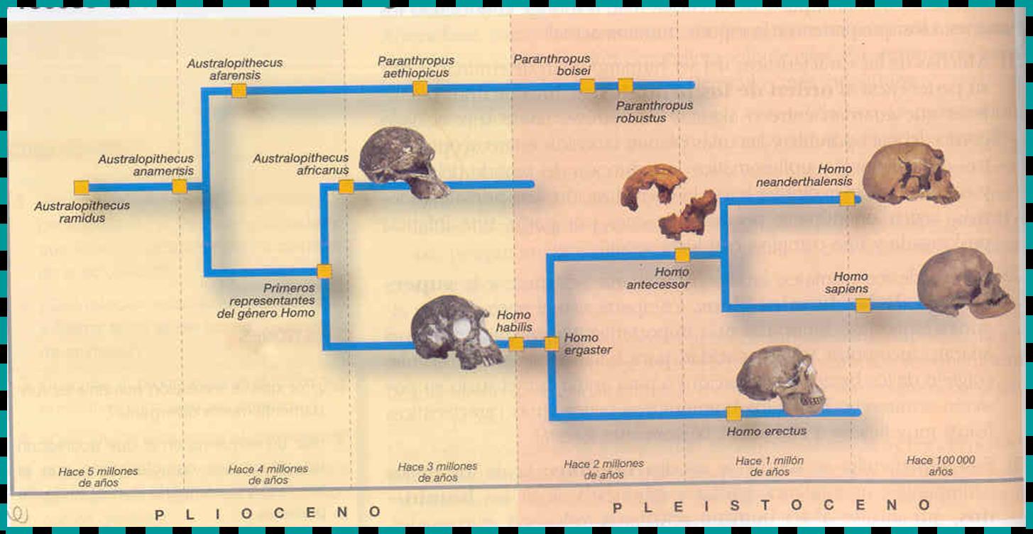 EL BLOG DE SONSOLES: ESQUEMA DE LA EVOLUCIÓN HUMANA