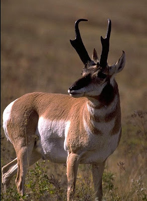 The original blog draw success pronghorn for Wyoming game and fish draw results