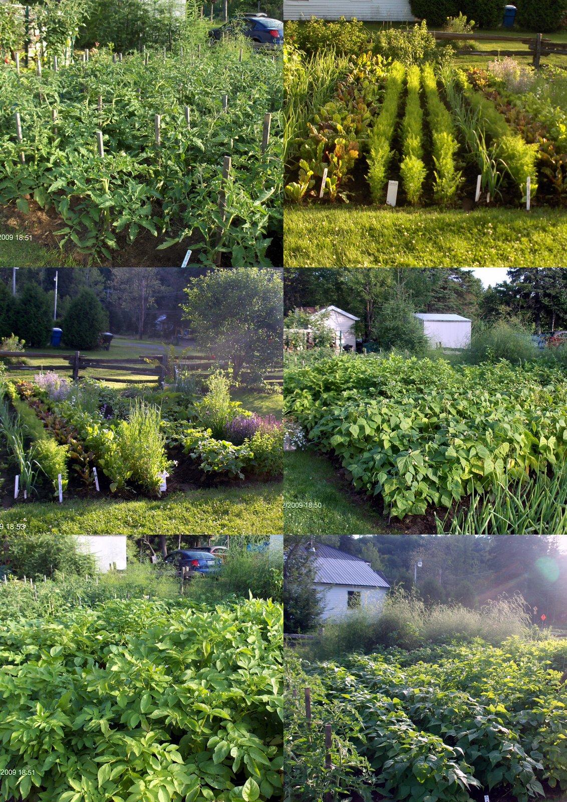Jardin maison jardin for Jardin potager