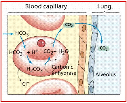 The traditional blood gas