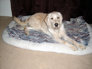Charlie laying on the dog bed in the living room, it's a very large crate bed with a crocheted blanket on it in blues, browns and whites