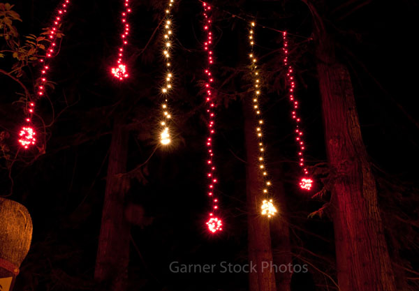 This shot shows vertical lines of Christmas lights hanging in cedar ...