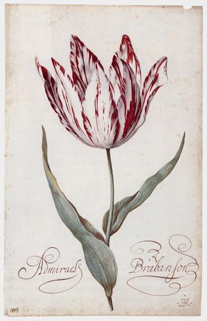 Balthasar van der Ast ( 1593 –  1657) - tulip