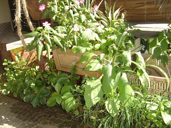 Plantio de flores comestíveis