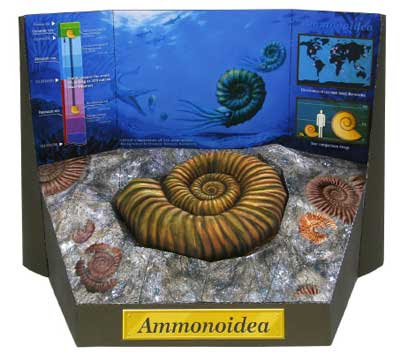 Ammonite Fossil Papercraft