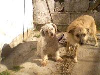 Anghel y Yuyu
