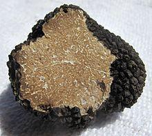 Yaz Trüfü (tuber aestivum)