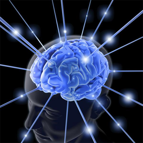 Investigaciones sobre el cerebro