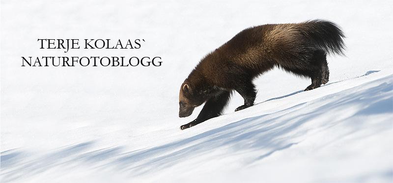 Terje Kolaas` fotoblogg