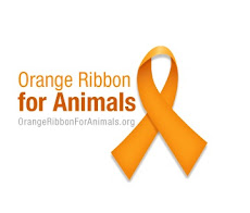 Orange Ribbon for Animals