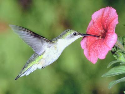 colibri5.jpg