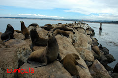 Sealions, CA