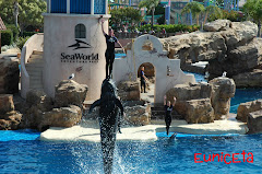 Seaworld, San Diego