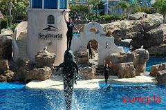 Seaworld, San Diego
