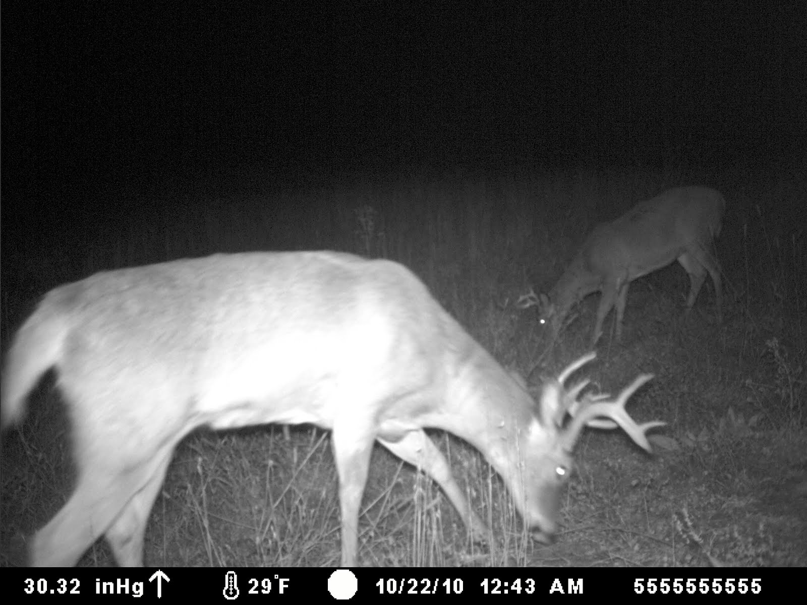 Trail Cam Pics Of Deer http://naturesnectar.blogspot.com/2010/10/trail-camera-pics.html