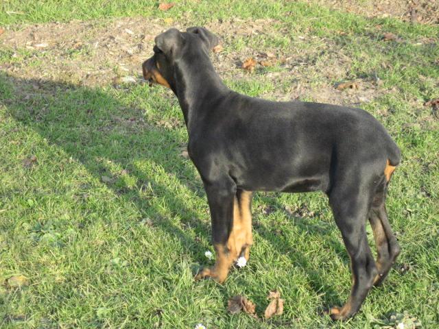 Pavimento In Gomma Per Box Cani : Addestramento ed educazione dei cuccioli e del cane adulto box