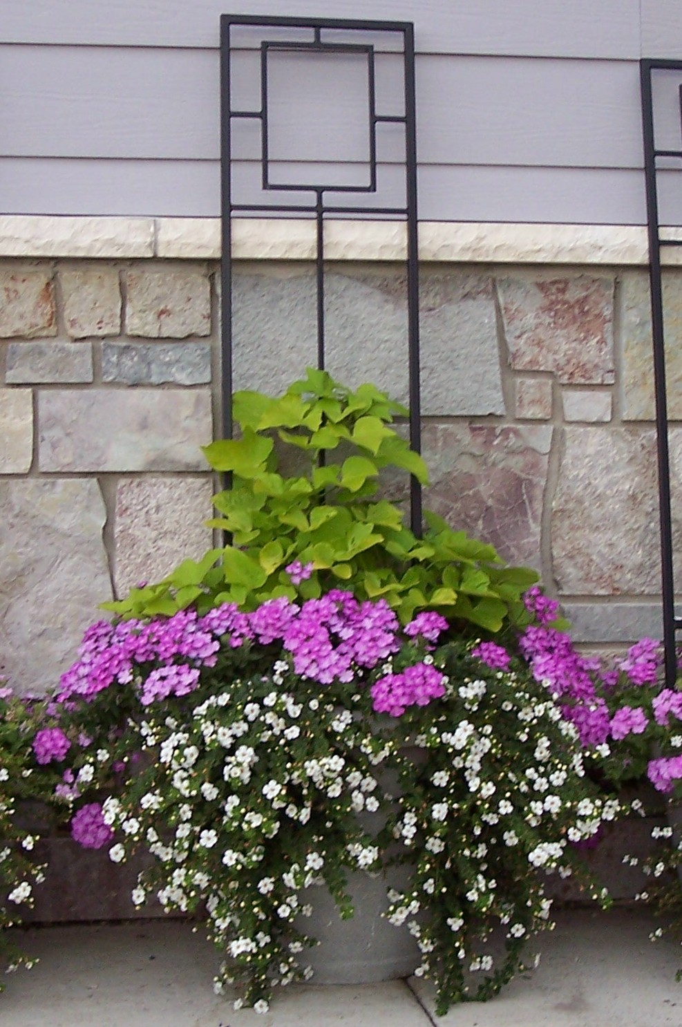Container Garden Idea Creating Height Container Trellis Full Sun