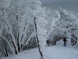 at Mt. Takami