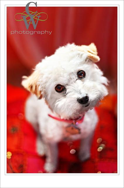 Dog Pageant Long Beach