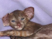 Saikou kitten