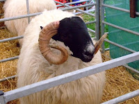 How I love a good agricultural show. The annual Bath & West Show, held at its purpose built showground in Shepton Mallet, showcases prize-winning livestock ...