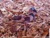 Foto berbagai jenis kadal