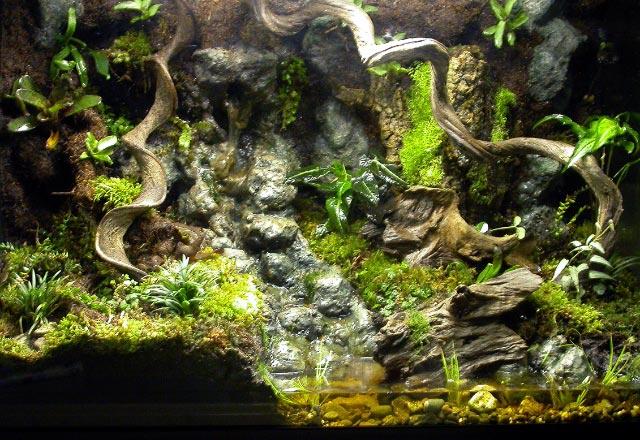 1000+ images about Iguana on Pinterest | Vivarium, Reptile ... 10 Gallon Paludarium